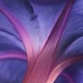 Undercolour Curve