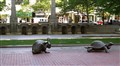Hare & Tortoise. Boston, MA.
