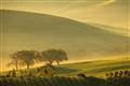 Tuscany landscape 01