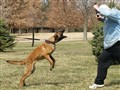 Police Dog Courage