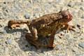 Strange frog