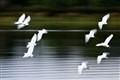 ten-egrets
