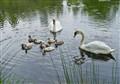 Swan's family