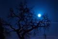 Moon Tree 01