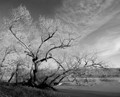 maple_river_trees_I