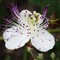 FlorALcaparra_DSC05232