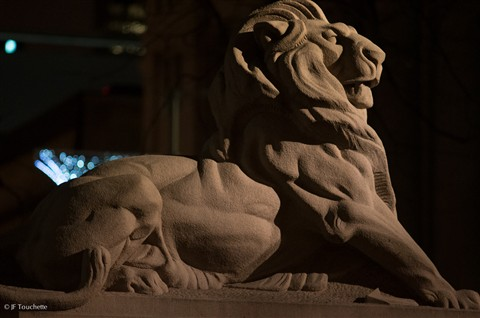 A Lion for Queen Victoria