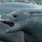 Crabeater seal, King Haakon Bay, South Georgia DSC05214