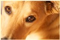 puppy gaze