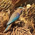 Noise Bird