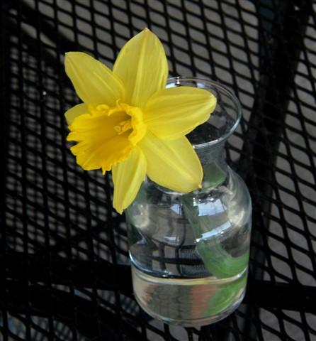 ~ Daffodil in Vase