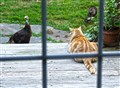 Catfrontation