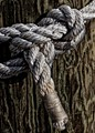 Knot on Piling