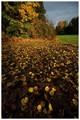 Octoberlight