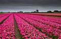 A Dutch landscape in spring