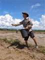 Rice sower