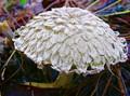 Unusual Fungus