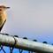 bird cropped