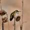Hummingbird 9-1-17