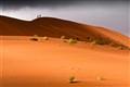 Desert wanderers