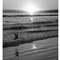 Curlew B&W, Stinson Beach