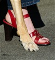 Feet (20110813226)