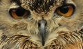 eyes_of_an_owl
