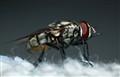 Fly Among The Fluff (Reverse Kit Lens)