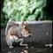 Squirrel (1 of 1)