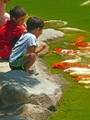 Kids and koi