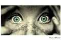 eyes on you!