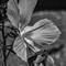LarryJ's_Flower_wNik