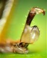 Grasshopper's paw