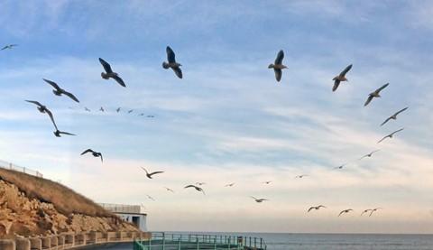 Cruising Seagulls