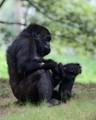 Atlanta Zoo 130803-015_