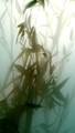 Bamboo thru Frosted Glass