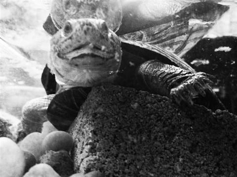 TURTKE