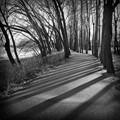 Graphic black and white landscape