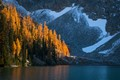Blue Lake Larches
