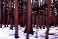Trees @ 50 MPH