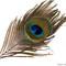 PeacockFeatherFF170920