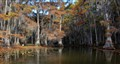 The Cathedral, Caddo Lake, Texas