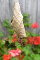 A Leaf-Curling Spider