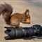 Nik_Squirrel