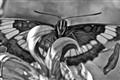 ButterflyBW