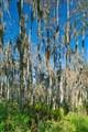 swamp_7832