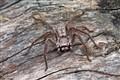 Spider d 0411