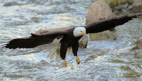 eagleflight1
