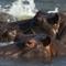 Hippos_9337