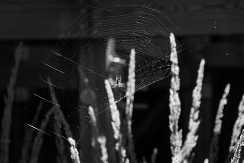 madame-web
